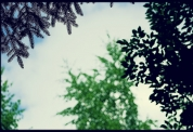 forest_sky